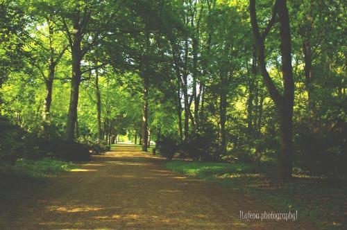 Parc du Tiergarten